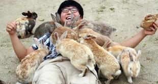 Cerita unik di Pulau Kelinci Jepang (Foto: Dailymail)