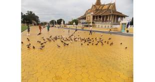 Kamboja Sumber foto : Irma yanti