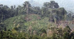 kawasan hutan TNGL (foto: Istimewa)