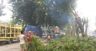 Pegawai Dinas Pertamanan Kota Medan, melakukan pemotongan dahan pohon yang menimbulkan kemacetan arus lalu lintas di Jalan Gatot Subroto, Medan Sunggal, Kamis (3/9)/WOL Photo/Gacok