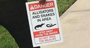 aligator-area