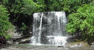Keindahan suasana hutan serta alam yang masih terjaga di obyek wisata Tangkahan, Kabupaten Langkat, Sumatera Utara