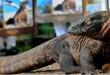 Pemerintah larang pembangunan di Pulau Komodo (Foto: Okezone)