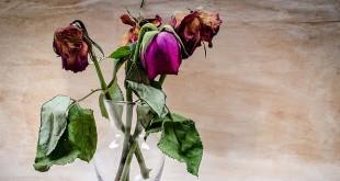 Bunga yang telah layu dapat memberikan efek negatif bagi keuangan Anda (foto: ilustrasi/ist)