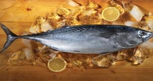 Cara membersihkan ikan tongkol (Foto: Google)
