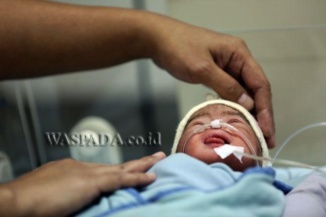 Perawat memeriksa kondisi satu  dari empat bayi kembar yang lahir di RSIA Stella Maris, Medan, Selasa (14/3). Bayi kembar empat, dua bayi laki-laki dan dua perempuan anak pasangan Zainedi Saputra dan Silvia Arlin yang mengikuti program kehamilan inseminasi tersebut, lahir dengan berat masing-masing 1,6 kg, 1,5 kg, 1,6 kg dan 1,7 kg melalui operasi caesar. (WOL Photo/Ega Ibra)