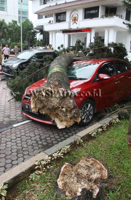 Sejumlah Pegawai Negeri Sipil (PNS) melihat mobil yang tertimpa pohon di halaman kantor Walikota Medan, Selasa (30/5). Dua unit mobil tertimpa pohon cemara yang diduga tumbang akibat lapuk dimakan rayap. (WOL Photo/Ega Ibra)