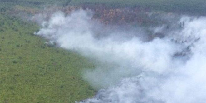 Ilustrasi kebakaran hutan (Foto: Okezone)