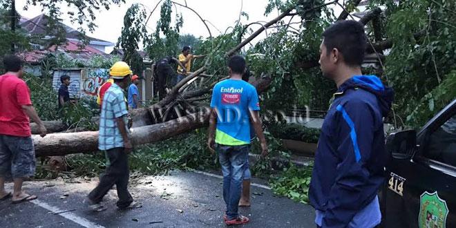 Pohon tumbang di Jalan Dr. Manyur depan Gereja Katolik Santho Yosef Medan. (WOL Photo/gacok)