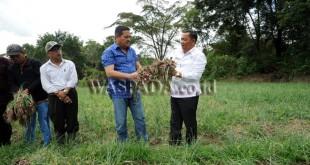 Bupati Samosir, Rapidin Simbolon (kanan) bersama Ketua Komite 2 DPD RI, Parlindungan Purba (kedua kanan) menunjukan bawang merah hasil panen Kelompok Tani Desa Huta Namora, Kecamatan Pangururan, Kabupaten Samosir, Sumatera Utara, Sabtu (12/8). Bawang merah merupakan salah satu hasil pertanian dari pulau Samosir, Sumatera Utara. (WOL Photo/Ega Ibra)
