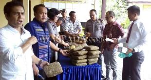 Kapolsek Medan Sunggal, Kompol Daniel Marinduri, memperlihatkan barang bukti 38 Kg ganja, disaksikan para tersangka sindikat narkoba antar provinsi yang diamankan.(WOL Photo/Gacok)