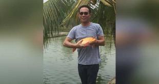 Gus Irawan Pasaribu saat menunjukkan seekor ikan mas dewasa hasil budidaya dan pembibitan di kolam yang ada di Hidrotani Sejahtera Sei Mencirim, Minggu (13/8) kemarin. (WOL Photo/Ist)