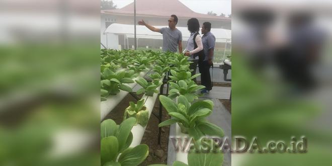 Gus Irawan Pasaribu saat memberi penjelasan di green house Hidrotani Sejahtera, Sabtu (12/8) kemarin. Mereka akan menggelar pelatihan 10 angkatan untuk 300 orang yang di-support Pertamina wilayah Sumbagut. (WOL Photo/Ist)