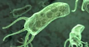 Helicobacter Pylori (foto: istimewa)