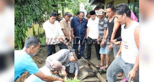 Camat Medan Selayang, Sutan T Lubis (nomor 3 dari kanan) menyaksikan penyembelihan lembu hewan kurban yang dilakukan Ketua MUI Medan Selayang, H. Khamarudin Sagala. (WOL Photo/Gacok)