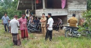 Muspika Mila, Kabupaten Pidie, Aceh, meninjau lokasi perkebunan warga diamuk gajah liar. (WOL Photo/ Chairul Sya'ban)