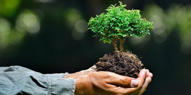 Tanam pohon (Foto: Stanfordnews)