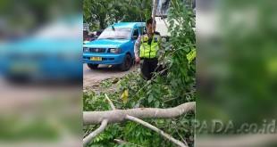 Personil Lantas Polsek Medan Sunggal membersihkan pohon tumbang.(WOL Photo/Gacok)